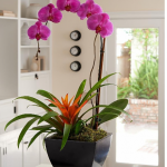 çiçek dekorasyonları mor orkide evde cicek. Dekorasyonu