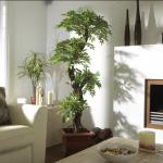 canlı bitki ev dekorasyonu