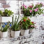 dekoratif canlı çiçekler