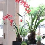 evde çiçek dizaynı