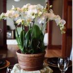 evde canli çiçek dekorasyonu salonda cicekler